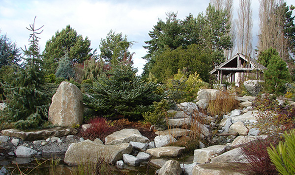 Arboretum rocks and trees at South Seattle College