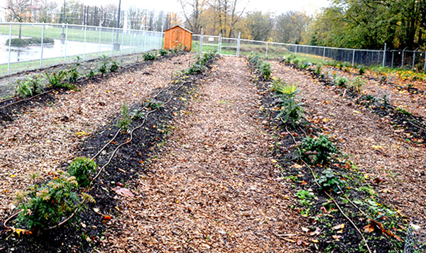 Community Garden Orchard of West Seattle closeup of land